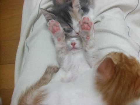 Un chat très mignon rêve les pattes en l'air