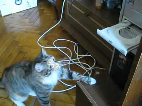 Un chat se bat contre un lecteur DVD