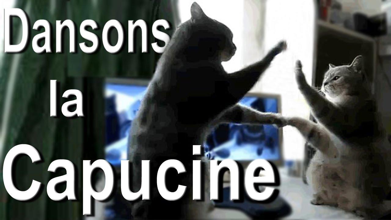 Dansons la capucine chanté par des chats !