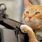 Et si les chats faisaient la guerre