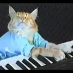 Un chat joue du clavier !