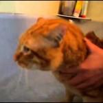 Un chat dit non au bain