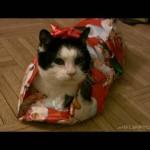 Comment emballer un chat pour Noel ?