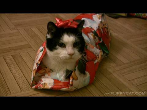 Comment emballer un chat pour Noel ?