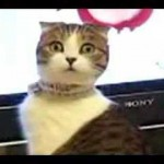 Un chat complètement flippé