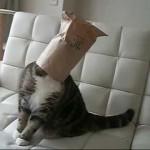 Maru le chat a la tête coincée dans un sac (encore)
