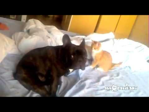 Un chaton saute sur le dos un chien en traître !