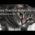 Nora le chat joue du piano