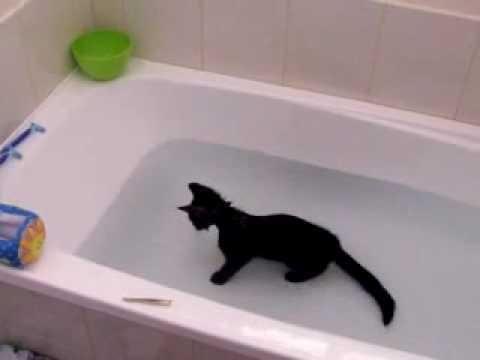 Un chat adore l'eau !