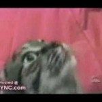 Un chat qui parle
