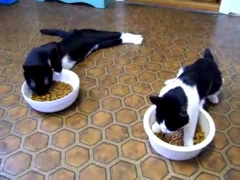 Des chats après une anesthésie !