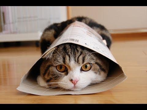 Maru le chat fait encore le malin
