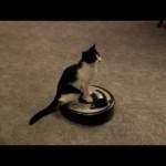 Un chat se laisse porter par un robot aspirateur