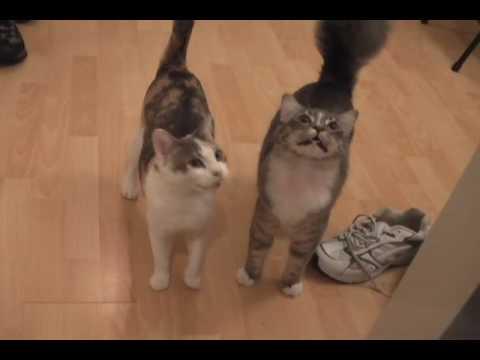 Des chats et des chatons miaulent