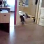 Des dérapages de chats !