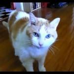 Des chats disent «Hello»