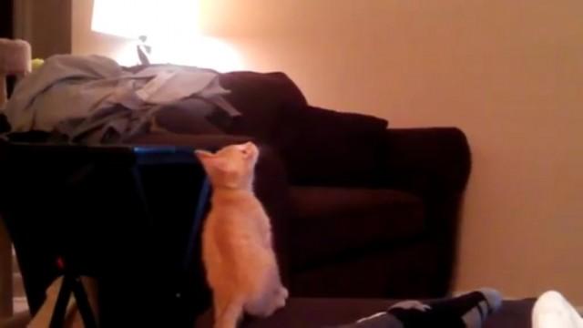 Un bébé chat tombe en voulant attraper un ventilateur