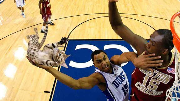 Un basketteur fait un dunk avec un chat