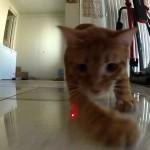 Deux chats poursuivant un rayon laser sont filmés avec une GoPro !