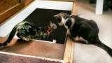 Un chat en pousse un autre dans le sous-sol