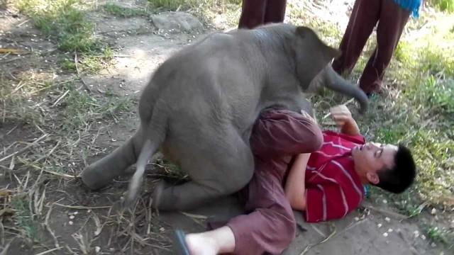 Un bébé éléphant cherche les calins