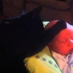 Ce chat caresse un bébé lorsqu'il pleure