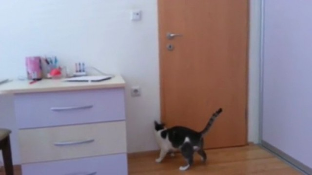 Un chat ouvre plusieurs portes seul pour sortir