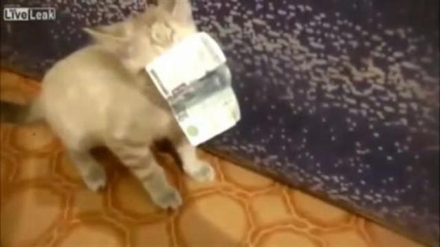 Ce chat aime l'argent !