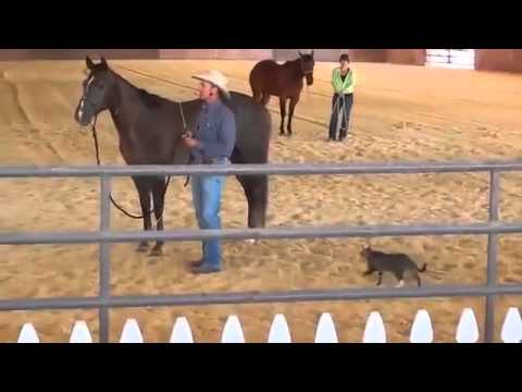 Un chat ninja attaque un cheval