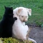 Un chat fait un massage à un chien