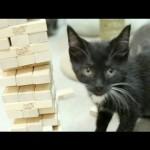 Des chatons jouent au Jenga !