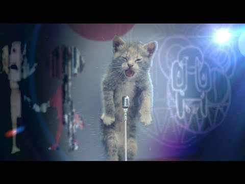 Un chat chante Creep de Radiohead