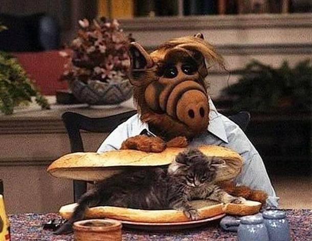photo de alf avec un chat dans un sandwich