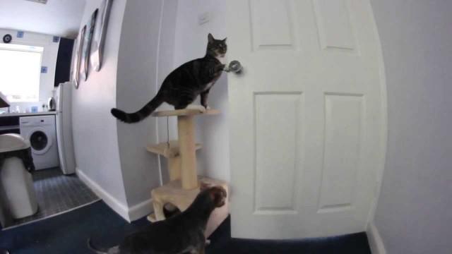 Deux chats ouvrent la porte de cuisine