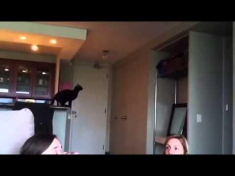 Un chat fait un gros fail en sautant
