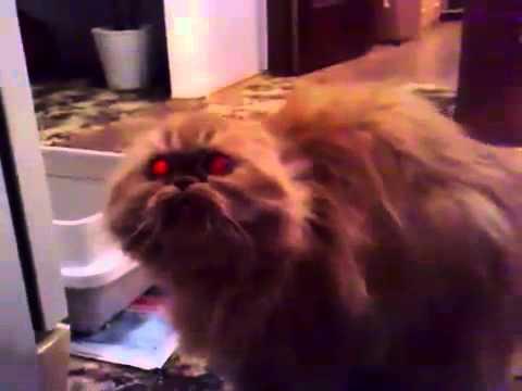 Un chat qui fait peur