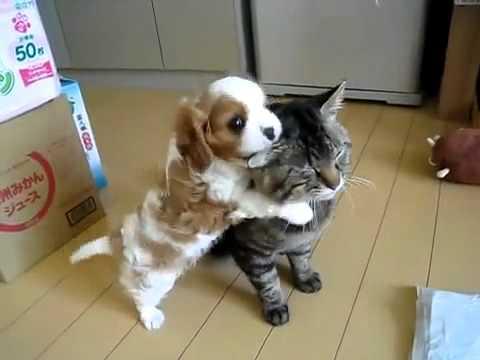 Un petit chien embête un chat !