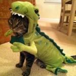 Un déguisement de dinosaure pour chat