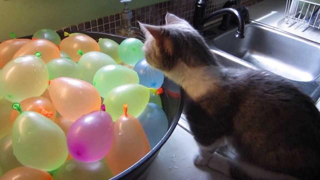 Un chat éclate des ballons bombes à eau