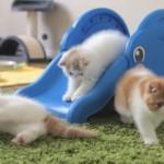 Des chatons sur des toboggans