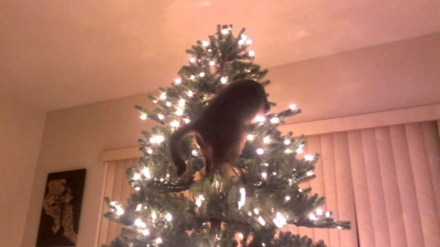 Sesshomaru le chat grimpe dans un sapin de Noël