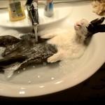 Un lapin prend une douche dans un lavabo