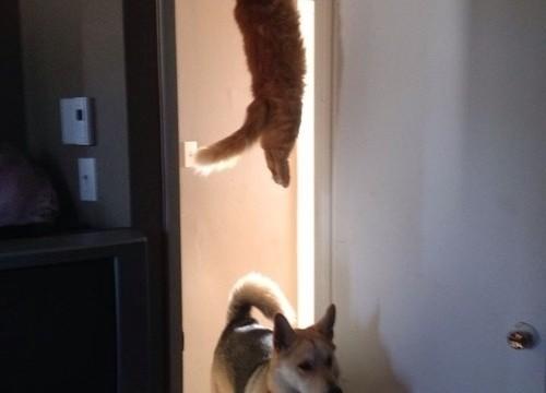 Un chat accroché à une porte