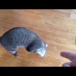 Des chats drôles font le mort après être visés par la main de leur maître !
