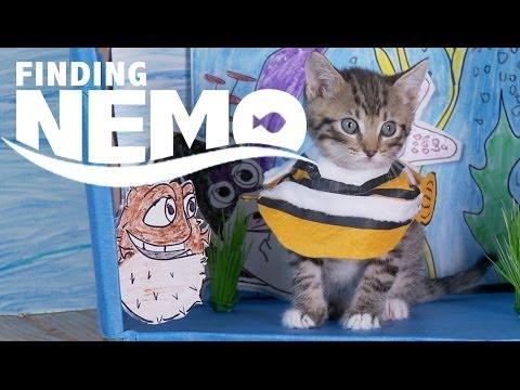Un remake de Nemo avec des chatons !
