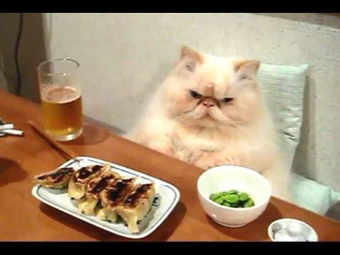 Des chats qui agissent comme des humains