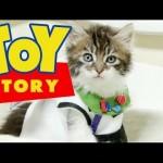 Un remake de Toy Story rejoué avec des chatons !