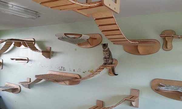 Un appartement paradisiaque pour chat