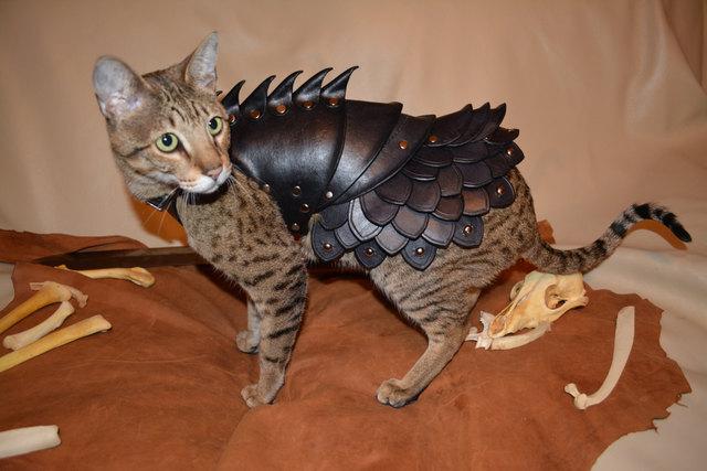 déguisement armure chat