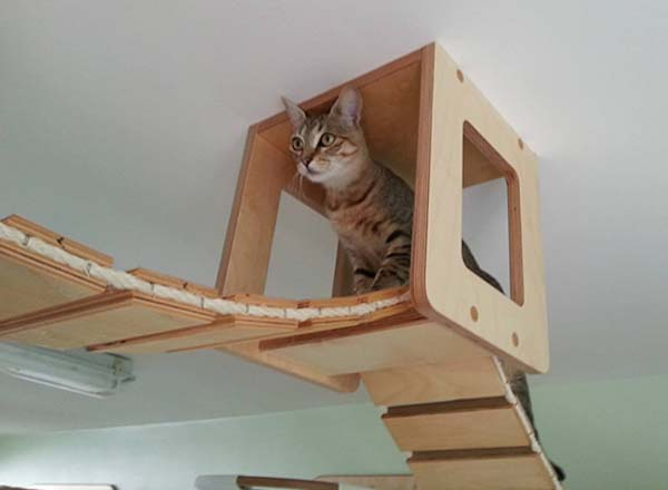 chat-appartement